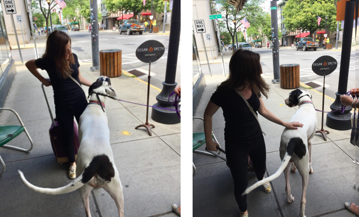 Sidewalk encounter with a very large spotted dog